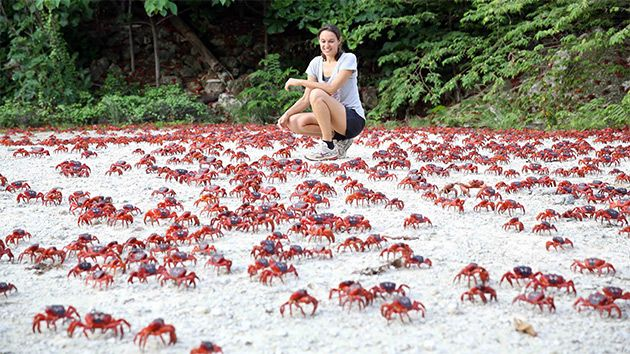 A Tiny Island. Millions of Crabs. Terrifyingly Awesome Photos. | Mother Jones