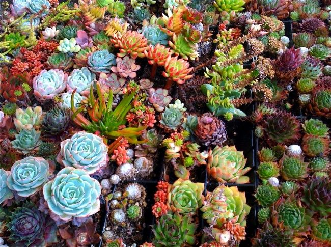 succulent_06-650x485.jpg (650×485)