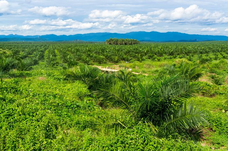 Malaysia tackles the big issues in the palm oil industry http://www.palmoilhealth.org/faq/malaysia-tackles-big-issues-palm-oil-industry/