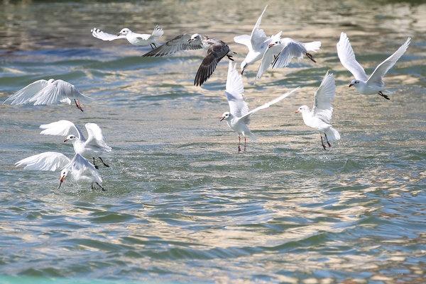 Fauna nel parco Nazionale di Camargue  Foto di ©Serena Campanini