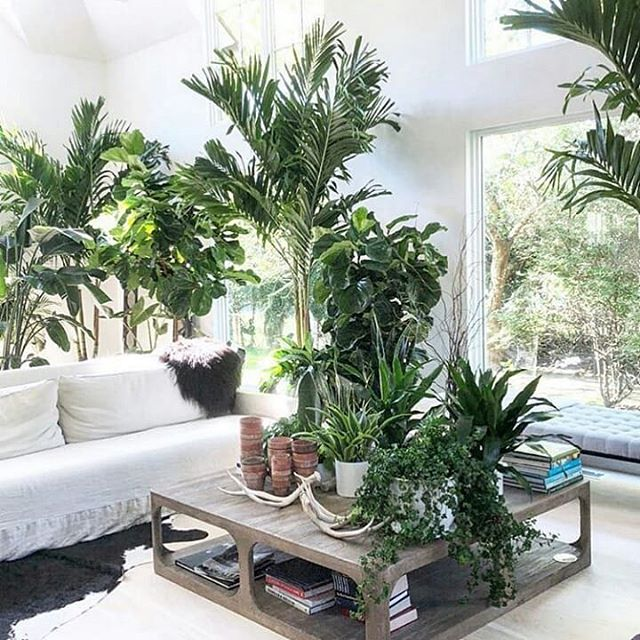 Living Room Inspiration With Indoor Plants Rustic Coffee Table