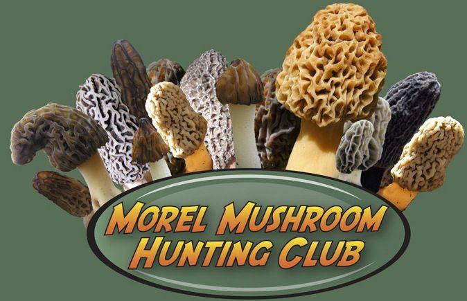 Morel Mushroom Hunting Club: Mushroom Identification, Forays, Species List, Recipes, Hunting Tips & Info, 1000's of Photos, Chat Room, Message Boards, Videos, Also Boletes, Chanterelles, Morchella, Mycology