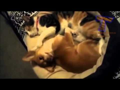 Animali divertentissimi video  Animali buffi video
