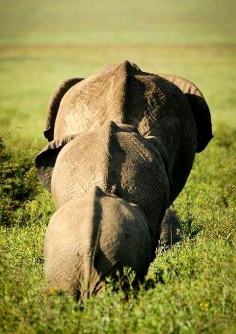 """""""Family is not an important thing. It's everything"""" ~ Michael J. Fox  Addo Elephant Park - Eastern Cape https://goo.gl/DJuoHN"""