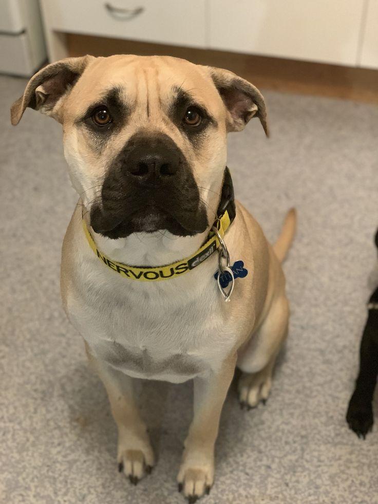 NERVOUS L/XL Clip Collar Dog friends, Anxious dog
