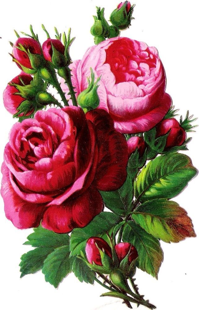 Oblaten Glanzbild scrap die cut chromo  Rose 13cm Blume flower