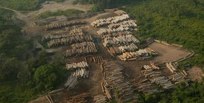The Effects of Illegal Logging