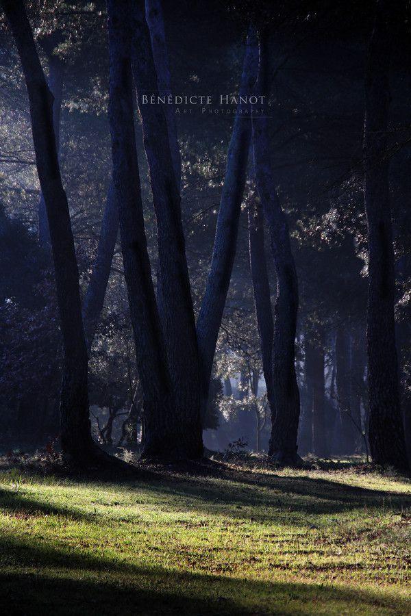 Lever sur la pinède III by Bénédicte HANOT on 500px