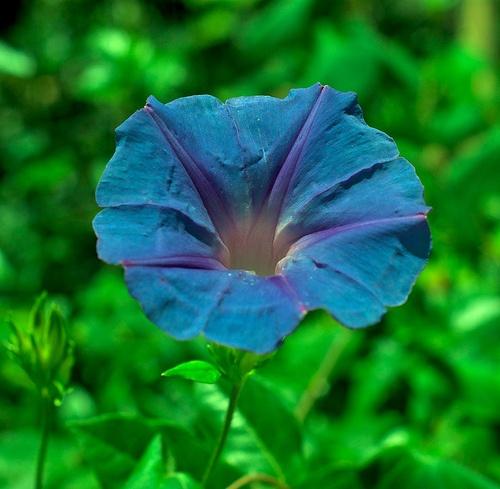 Lilac Breeze