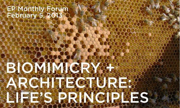 Biomimicry + Architecture
