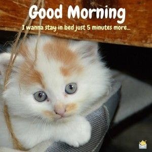 Cute Good Morning Image with kitten