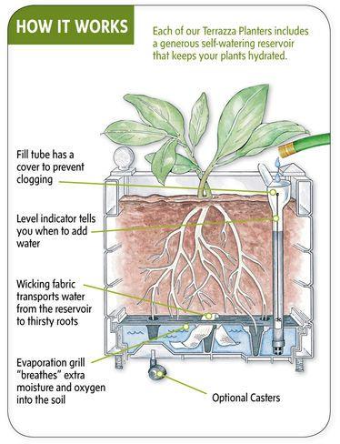 Self Watering Raised Beds Buy From Gardener 39 S Supply Jardinage Pinterest Gardens