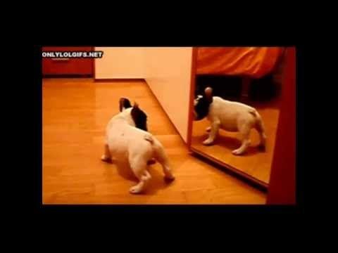 Video de perros y gatos graciosos - Funny dogs and cats -  #dog #dogs #funnydogs #puppy #doglover #animals #animal #pet #cute #pets #animales #tagsforlikes Disfruta de este divertido vídeo de perros y gatos. Enjoy this funny video of cats and dogs. Facebook: Canción:  perros graciosos perros divertidos video perros graciosos video perros d... - #Dogs