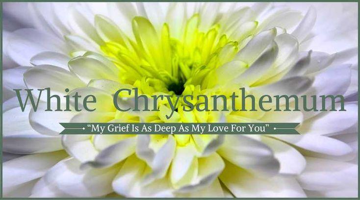 Chrysanthemums Meaning: White Chrysanthemums
