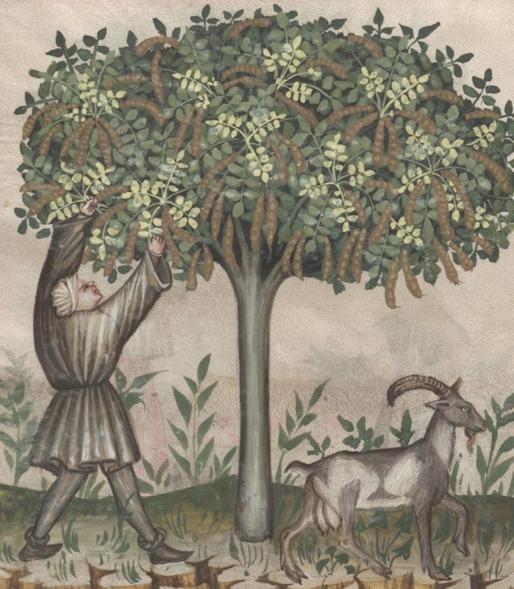 A farmer picking pods from an carob tree - Carube | Österreichische Nationalbibliothek - Austrian National Library | Public Domain