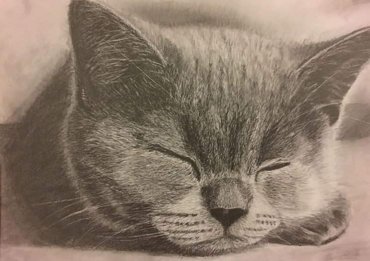 macska rajz - Majoros Martina