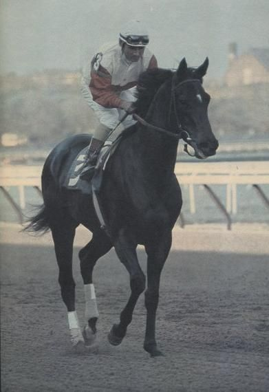 Ruffian…she was Queen of racing and simply awesome, broke my heart when I saw her go down.