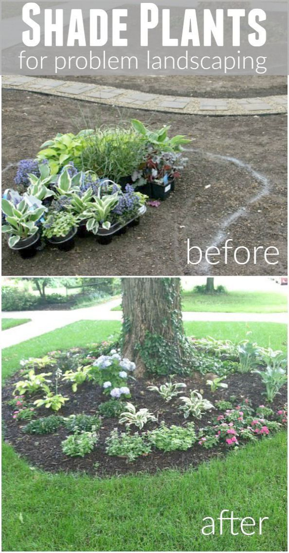 Need Landscaping Advice These Tips Can Help With Images