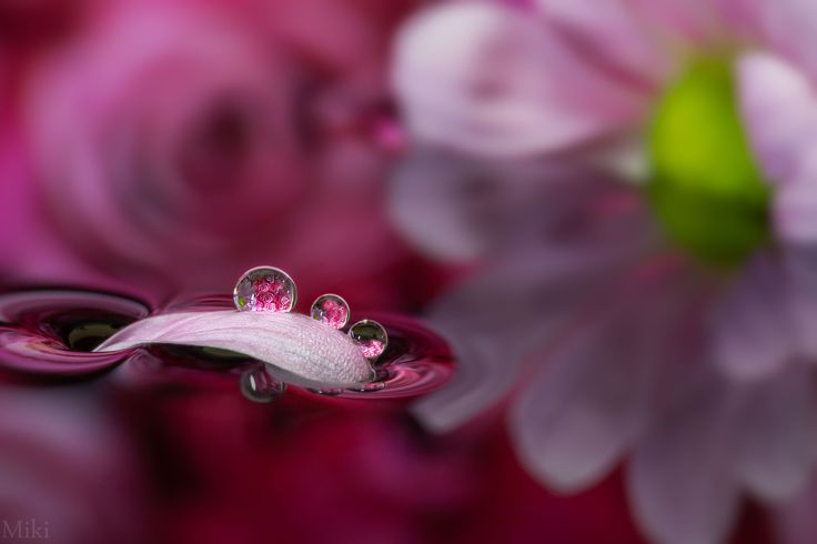 Missing Petal by Miki Asai on 500px