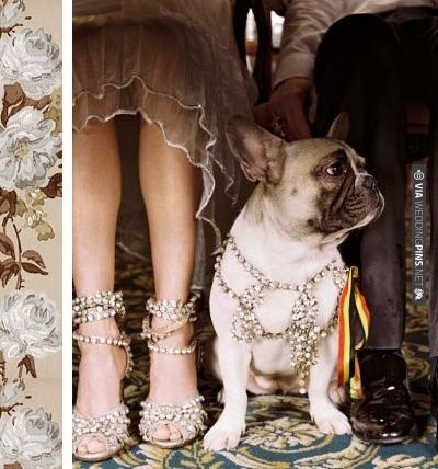 doggy bling | CHECK OUT MORE IDEAS AT WEDDINGPINS.NET | #weddings #weddinginspiration #inspirational