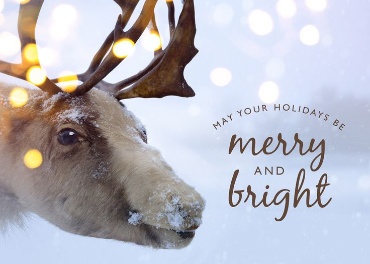 9 best holiday greetings for businesses images on pinterest reindeer reminder christmas greeting card customize with your logo imprinted inside below the message colourmoves