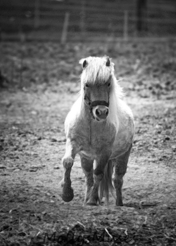 Horse Pony Art Print white pony kicking up his by MollysMuses: Ponies Kicks, Hors Ponies, Ponies Art, Animal Friends, White Photos, Hors Iii, Hors Pics, White Ponies, Childhood Friends