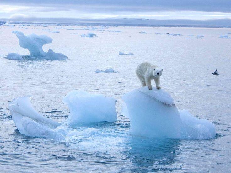 Планета Земля и Человек: На Северный полюс пришла оттепель