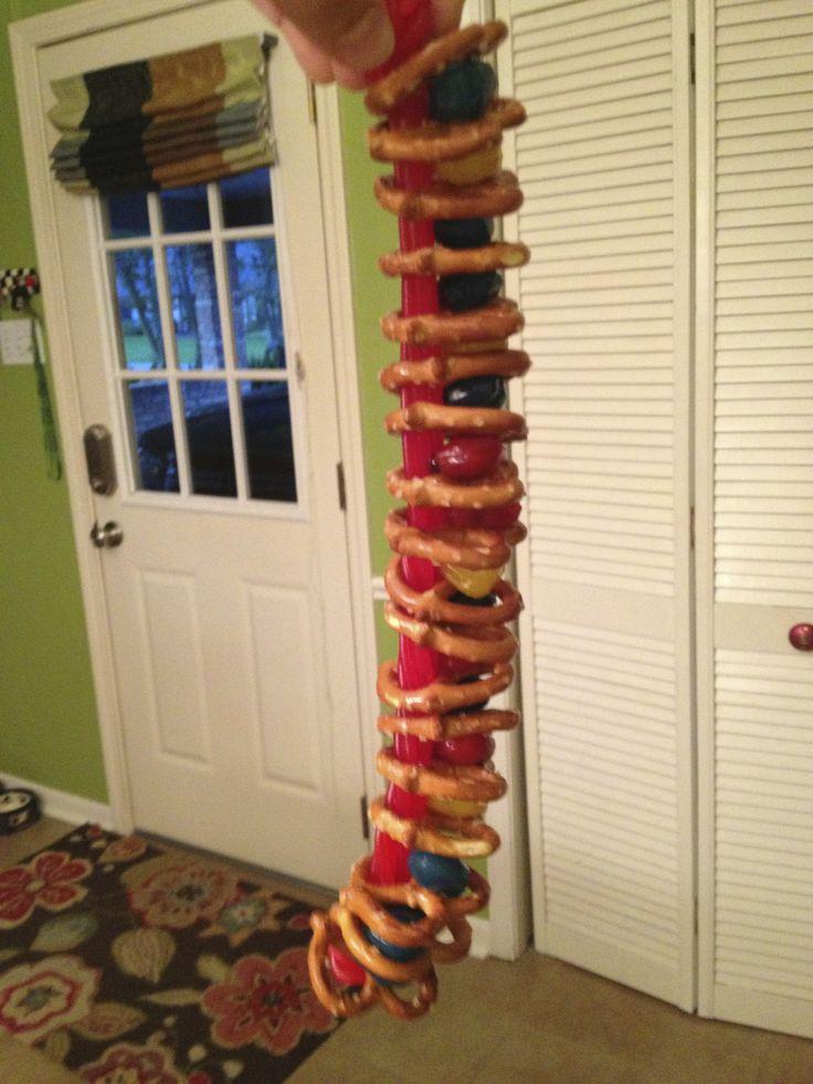 Human spine food model: pretzel vertebrae, fruit gusher discs, and a twizzler spinal cord