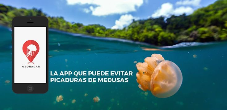 Este verano las #medusas no serán un problema gracias a la #app Oboradar   #vacaciones #playa #medusas #mediterraneo
