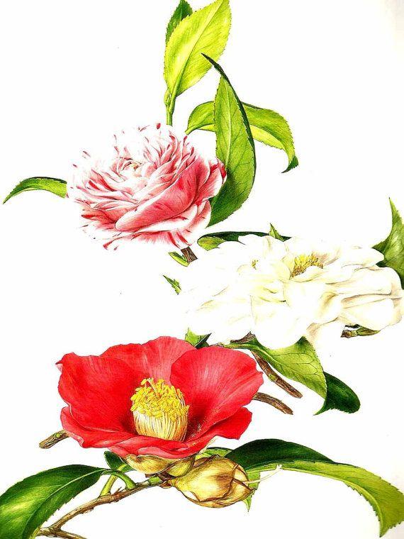 Vintage Flower Print  Botanical Print  by VickiesBeachHouse, $10.00 ETSY