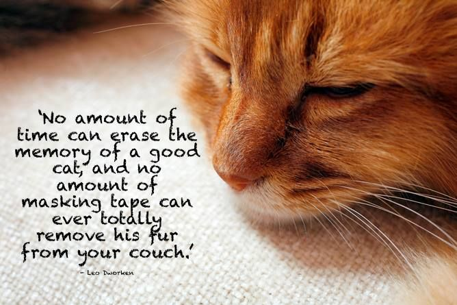 Quotes About Love And Cats