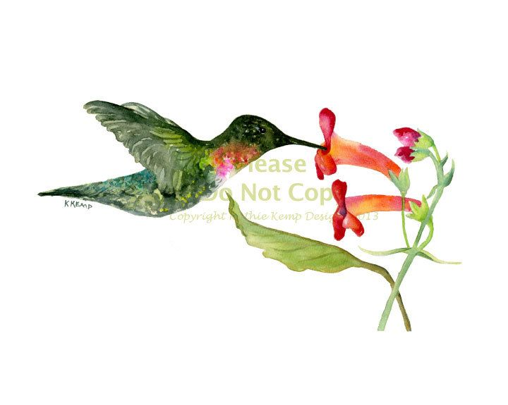 Hummingbird Original Watercolor Painting Drawing Gift Idea ...
