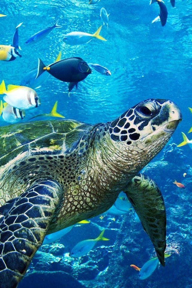Una tortuga marina haciendose un selfie