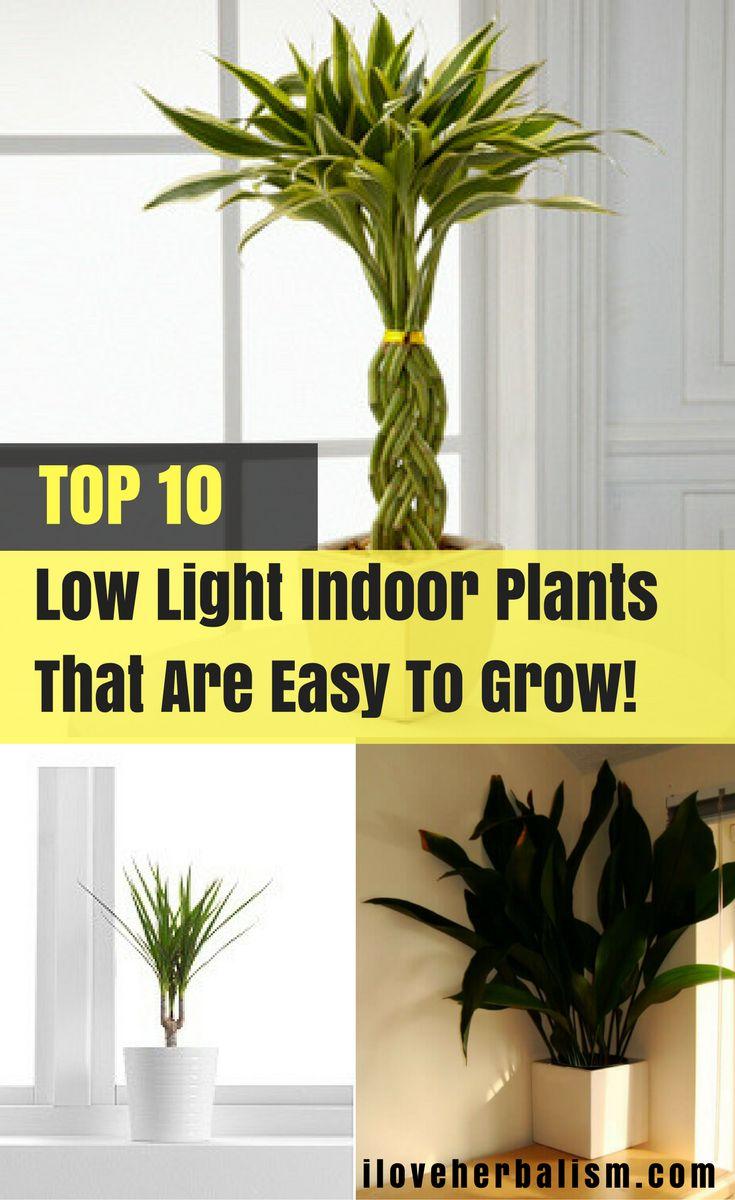 723 best indoor gardening images on pinterest indoor gardening
