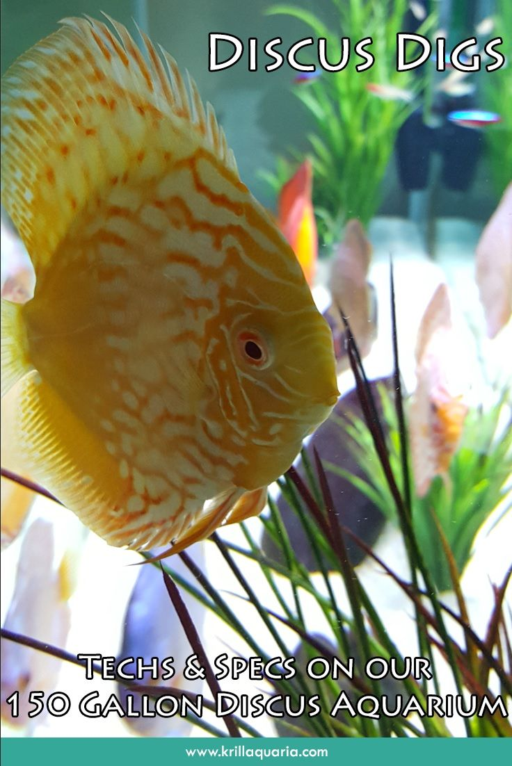 Fish aquarium how to maintain - Interested In Knowing About The Equipment We Use To Maintain Our 150 Gallon Discus Aquarium