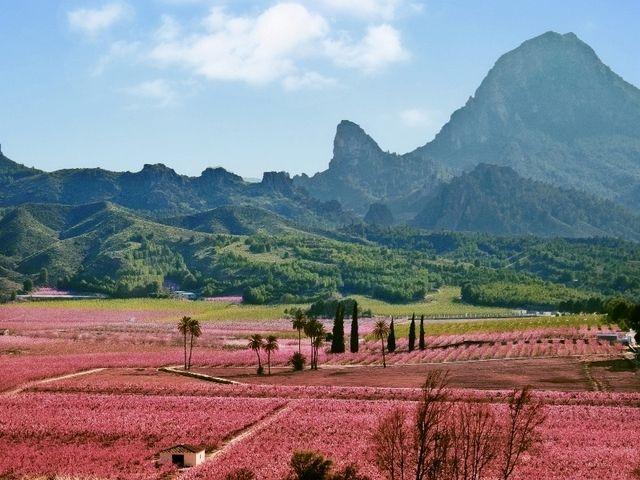 Cieza in bloom, La Floración in Murcia is underway for 2013