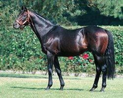 Razas de caballos: caballo Pura Sangre Inglés