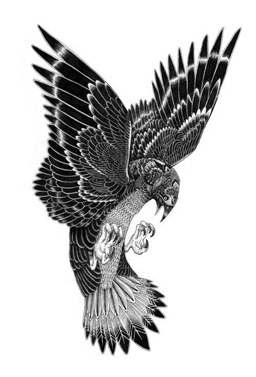 Bird of prey by Lain Macarthur