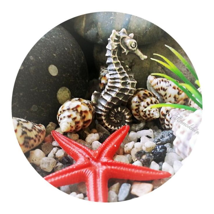 Seahorses are delightful tiny creatures dwelling in shallow habitats such as reefs among eelgrass and seaweed.Picture by @samokhinavalentina   #faerybeads #coral #reef #sealife #seahorse #hippocampus #kraken #octopus #starfish #conch #shell #deepsea #julesverne #charms #beads #charmsbracelet #beadsbracelet #jewelry #dutchdesign #handmadeinholland