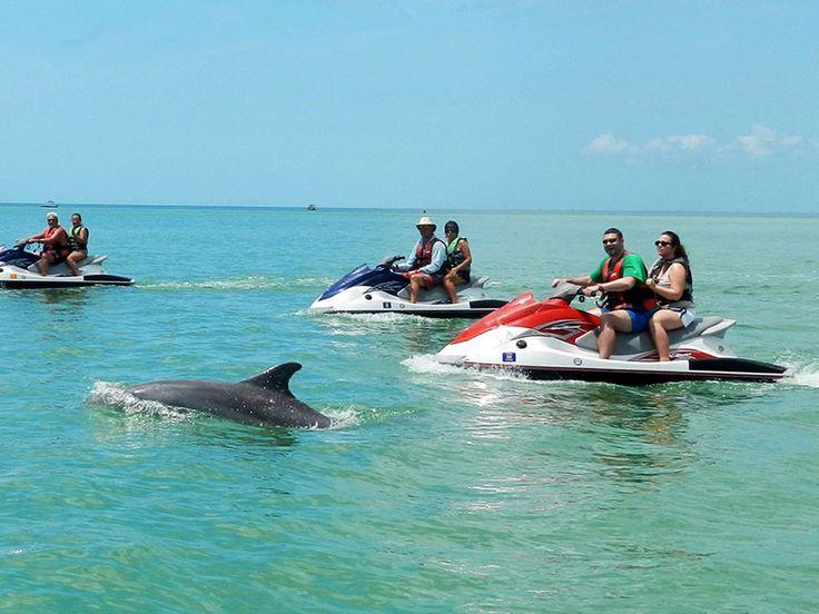 Dolphin Tour at Bonita Springs Florida!