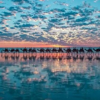 Camels In Broome Australia Photo