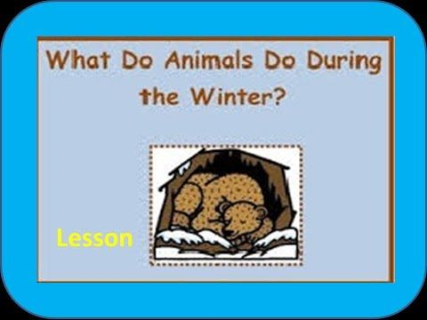 ▶ Hibernating and Migrating Animals - With examples -for Kids of Kindergarten,Preschoolers,Toddlers - YouTube