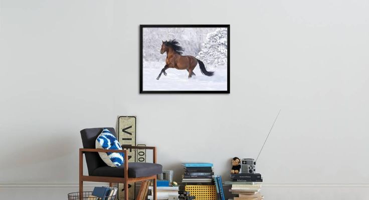 Bay Andalusian Stallion Running in the Snow, Berthoud, Colorado, USA Photographic Print by Carol Walker at AllPosters.com