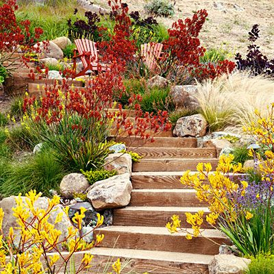 Velvety kangaroo paws (Anigozanthos 'Orange Cross' and Bush Gems series) add spicy color against golden grasses in a garden in Tiburon, California, designed by Arterra Landscape Architects (arterrallp.com). The plants tolerate drought but flower best with some water in summer and excellent drainage in light sandy soil.