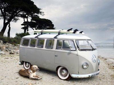 #combi#surf#dog