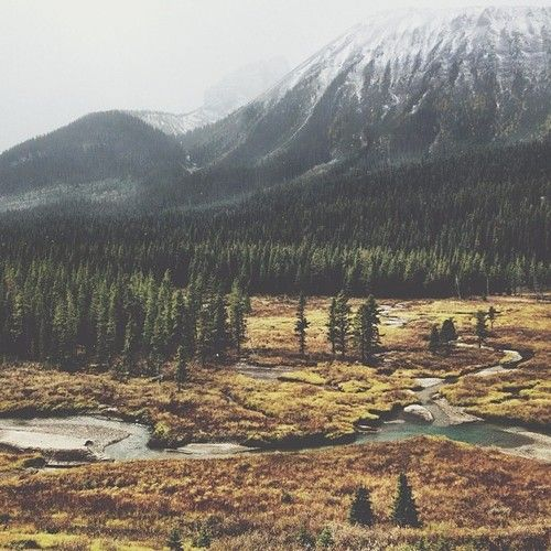 campbrandgoods:  scenic scenery in Spray Valley Provincial Park...