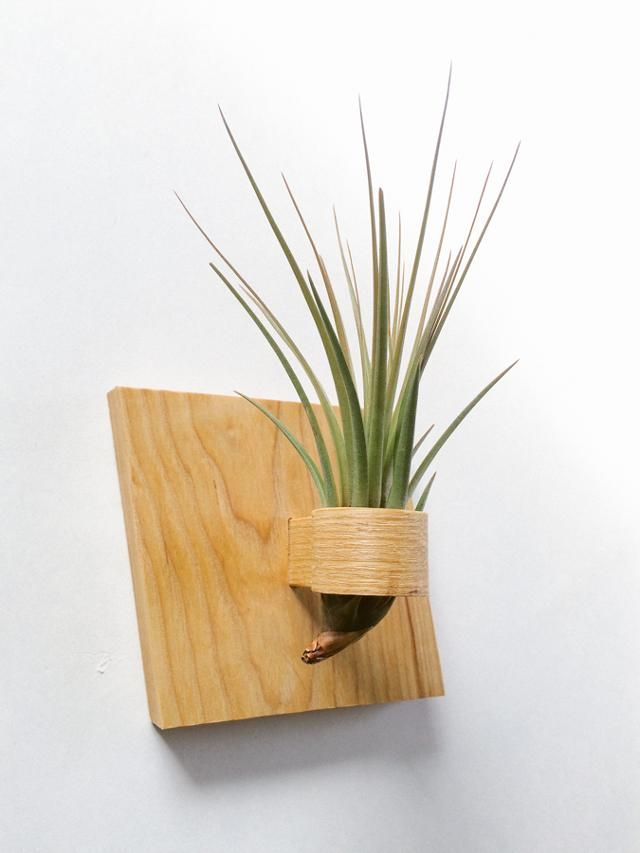 Italic Wood Ash