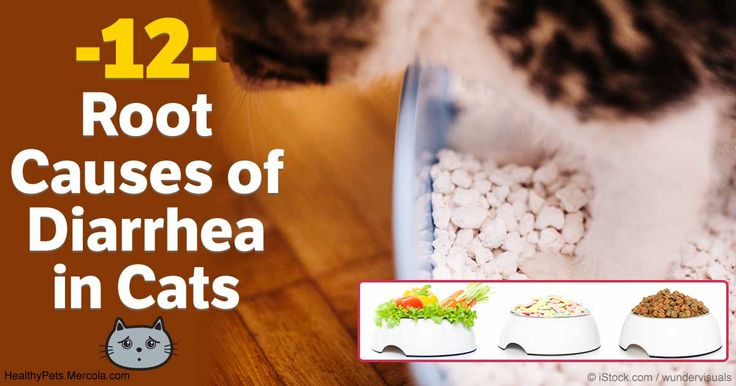 Cats and dogs show different signs when they have tummy troubles, and diarrhea is something they both experience.