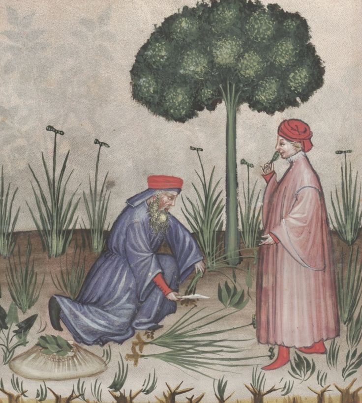 A bearded man cuts off the roots of the galangal plant, a standing younger man is smelling the flower - Galenga | Österreichische Nationalbibliothek - Austrian National Library | Public Domain