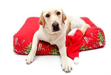 kutyafekhely, karácsonyi ajándék kutyának, petbag